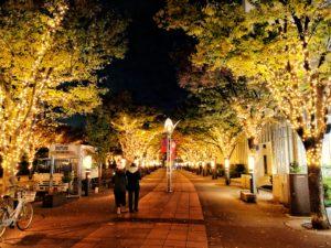 街路樹 ライトアップ
