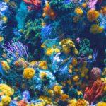 たくさんの熱帯魚が水槽に入っている