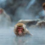 サルが温泉に入っている